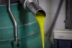 Aceite de oliva virgen extra de Cosecha tempana. Cooperativa San Isidro